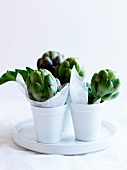 Artichokes in pots