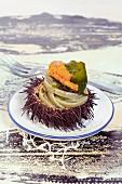 Nudel mit Seeigelrogen und Algen, im Seeigelgehäuse