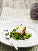 Salt cod with broad beans