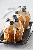 Chocolate chip muffins with blueberry frosting