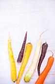 Verschiedene bunte Karotten, roh