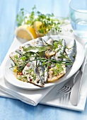 Raw sardines marinated with lemon and herbs