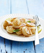 Roasted scallops with lemon and salt