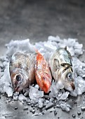 Three raw fresh fish