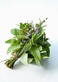 Bündel frische aromatische Kräuter