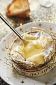 Camembert with hay