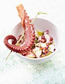 Octopus-Salat mit Olivenöl