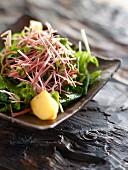 Blattsalat mit Algen, Apfel, Schnittlauch und frischem Zitronengras
