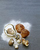 Assortment of shellfish