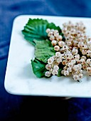 Bunches of white currants