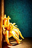 Buddha's Hand (Gefingerte Zitrone, Citrus medica)