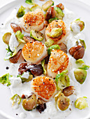 Nuts of scallops with Brussels sprouts and chestnuts