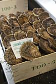 Kiste mit französischen Belon Austern
