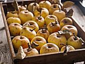 Gelbe Äpfel auf Holztablett
