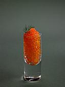 Lachskaviar im Glas