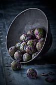 Violett-grüner Rosenkohl