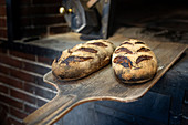 Zwei frisch gebackene Landbrote auf Holzschieber vor Holzofen