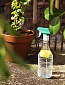 Hausgemachtes Schutzmittel mit Zitrone gegen Ameisen