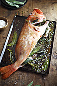 Grilled rock fish with herbs