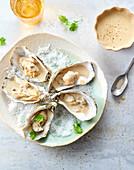 Heiße Austern mit Apfelwein (Bretagne, Frankreich)