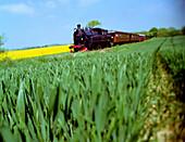 Steamer Kappeln Suederbrarup, through green and yellow fields, Schleswig-Holstein, Germany