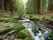 Little creek, Rurtal near Hammer, Eifel, Germany