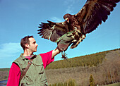Young man with white-tailed eagle, game reserve Hellental, Eifel, Germany