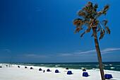 Palm tree on the beach in the sunlight, Panama City Beach, Florida, USA, America