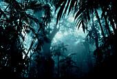 Trees in the rainforest, Venezuela, South America, America