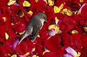 Dead bird on flower petals