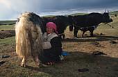 Tibetische Frau beim Yak-Melken Tibet