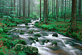 Creek running through wood, Bavaria, Germany