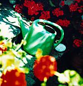 Gießkanne Blumen