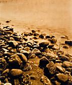 Steine am Ufer
