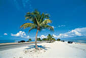 Palm tree at the beach in the sunlight, Sanibel, Florida, USA, America