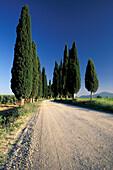 Cypress avenue under a blue sky, Tuscany, Italy