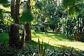 The deserted botanic garden Jardin Majorelle, Marrakech, Marocco, Africa