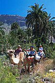 Camel ride, La Baranda-Camel-Safari-Park, Fataga, Gran Canaria, Canary Islands, Spain