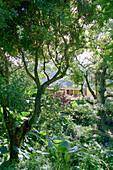 House, Rainforest, Hostel, Le Relais de la Maison Rousse, Martinique, Caribbean