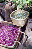 Dried flowers in the sunlight, Drome, France, Europe