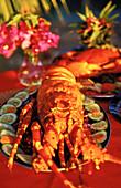 Lobster on plate, animal lobster