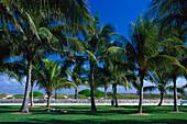 Palm trees, South Miami Beach, Miami Florida, USA