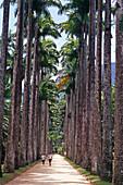 Botanical Gardens, Rio de Janeiro Brazil