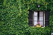 Leafy Villandry castle, Chateau Villandry, Loire, Loire Valley, Val de Loire, France