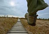 Big steps foreward on wooden catwalks, Hohes Venn, Eifel, Belgium