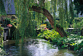 Pond beneath a willow at the village Pont-Aven, Brittany, France, Europe