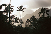 Palm trees in front of mountains under grey clouds, Lanikai Beach, Oahu, Hawaii, USA, America