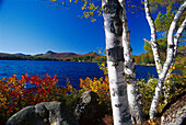 Autumnal trees under blue sky at Lake Groton, Boulder Beach State Park, Vermont USA, America