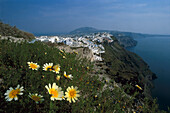Flowers at a mountainside and view at Fira, Santorin, Cyclades, Greece, Europe