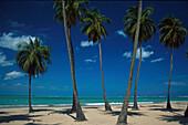 Strand, Seven Seas, Palmen, Puerto Rico Karibik